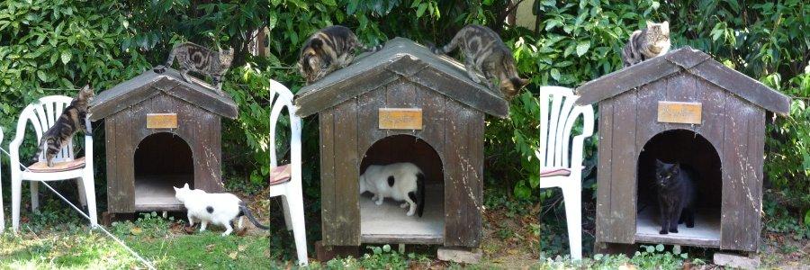 Nouvelles for Adaptation chat nouvelle maison